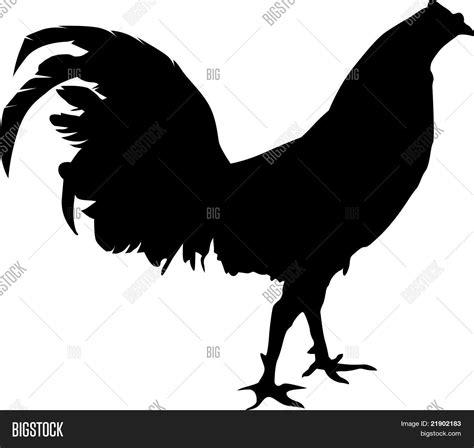 pelea de gallo s vector rooster silhouette vector photo bigstock
