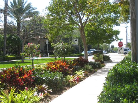 florida friendly landscaping ifas palm beach extension