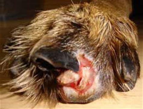 just fabulous hair nail salon longwood lake mary fl dog broken nail nerve exposed nail ftempo