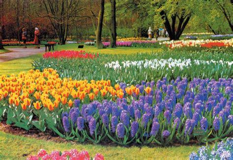 wallpaper bunga di taman download gambar taman bunga