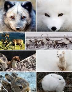 animals that change color arctic animals europe and animal kingdom on