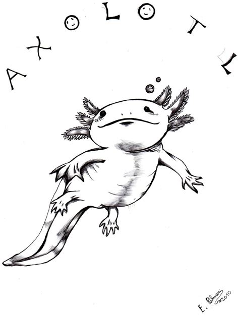 Axolotl Coloring Page by Axolotl Pose 2 By Furiarossaandmimma On Deviantart