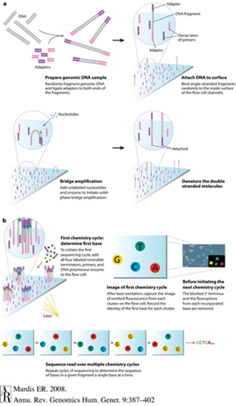 illumina technology dnaseq illumina uvm genetics genomics wiki