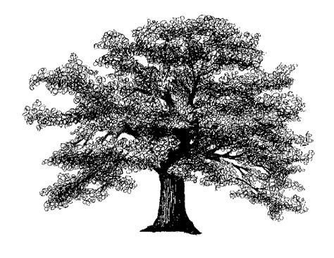 oak tree drawing rhinebeck child and family center llc the tree at the