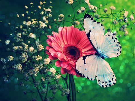 butterflies background wallpapers butterflies wallpaper cave