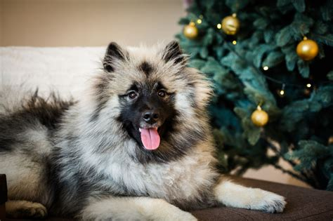 keeping your dog away from your tree 10 suggestions to keep your cat or your tree pets4homes