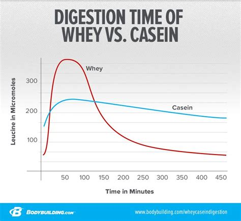 casein protein before bed what s the difference between whey and casein protein