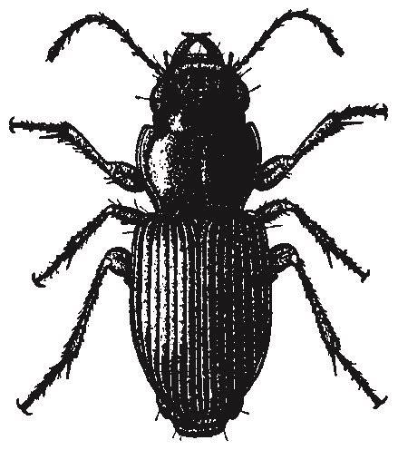 long skinny black bug in house long skinny black bug in house with wings house plan 2017
