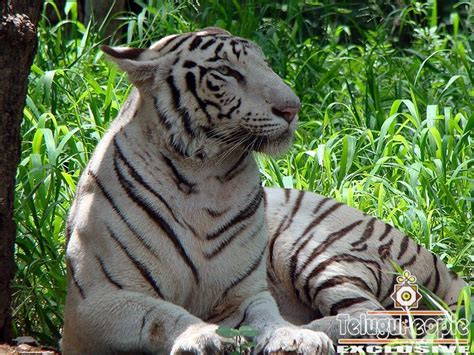 Nehru Zoological Park Photo Gallery