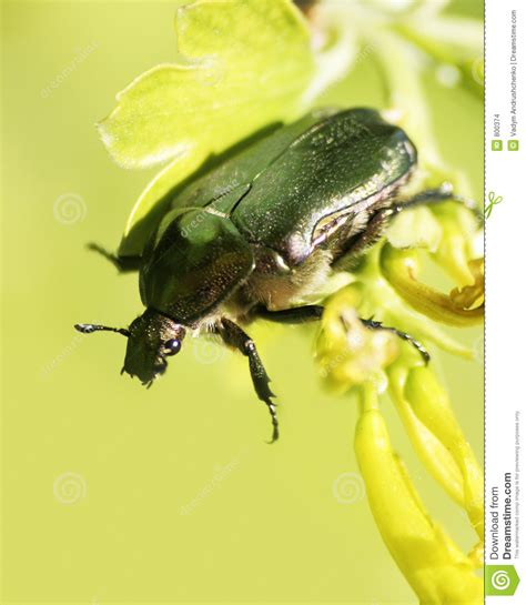 bug xl reguler 1gb may bug stock images image 800374