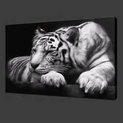 stunning white tiger premium canvas picture wall