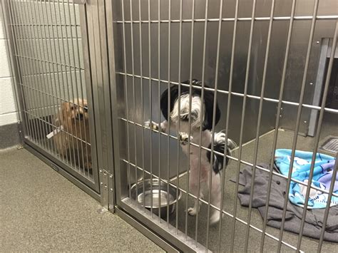shelter columbus ohio lost dogs wait at franklin county shelter after running during fourth of july