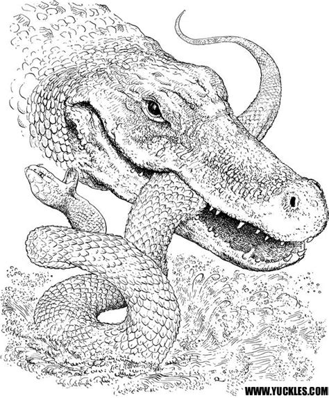 coloring pages crocodile alligator alligator coloring page by yuckles