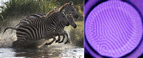 an observed pattern in nature without attempting to explain it this device turns neon plasma into natural patterns pbs
