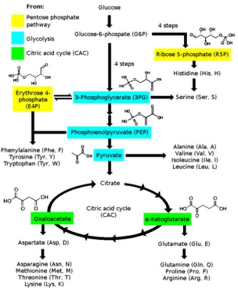 amino acid synthesis wikipedia
