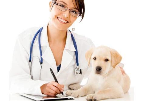 Imagenes De Medicas Veterinarias | celebraci 243 n del d 237 a del m 233 dico veterinario con agenda