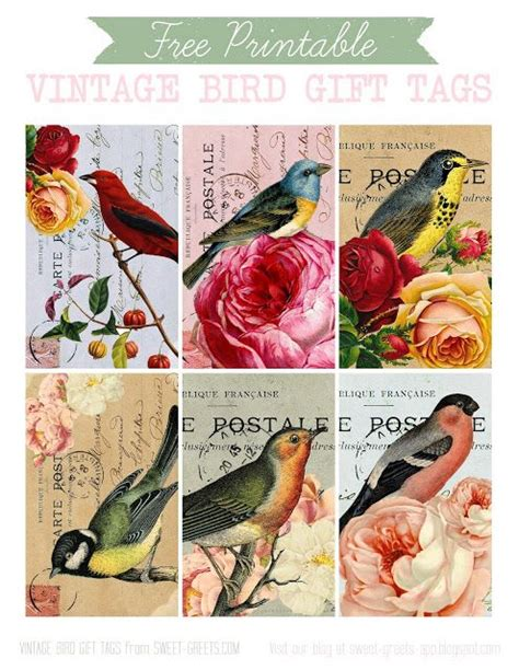 Mud Bay Gift Card - 37 best vintage bird images images on pinterest vintage birds vintage images and