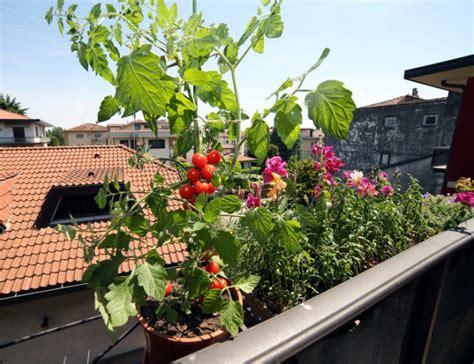 huerto urbano en casa tips de mantenimiento de un huerto en casa ingredientes