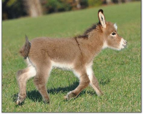 miracle of the century a baby donkey comes out of womb donkey wallpapers fun animals wiki videos pictures