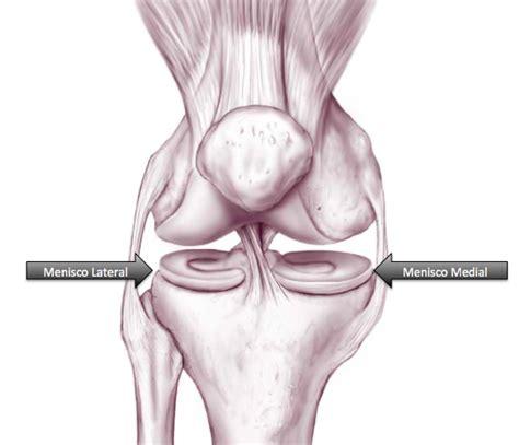 corno posteriore menisco interno menisco dr guilherme gracitelli