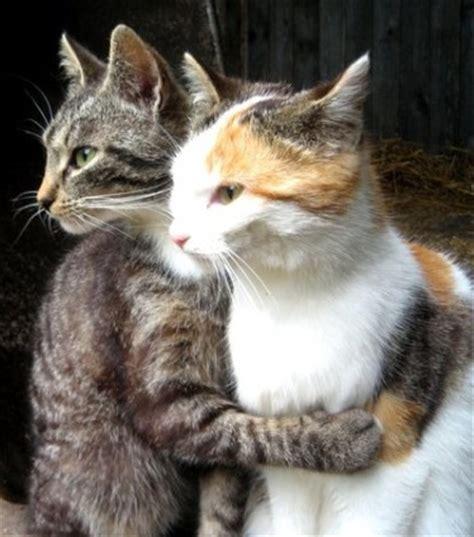 cat hugs image gallery hugging cats