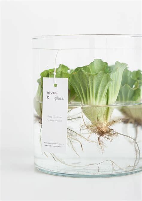 plant l home 1000 ideas about water plants on pinterest ponds pond