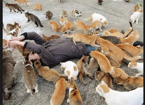 caretaker of japan s cat island is overwhelmed with tourists flock to japan s cat island in record numbers