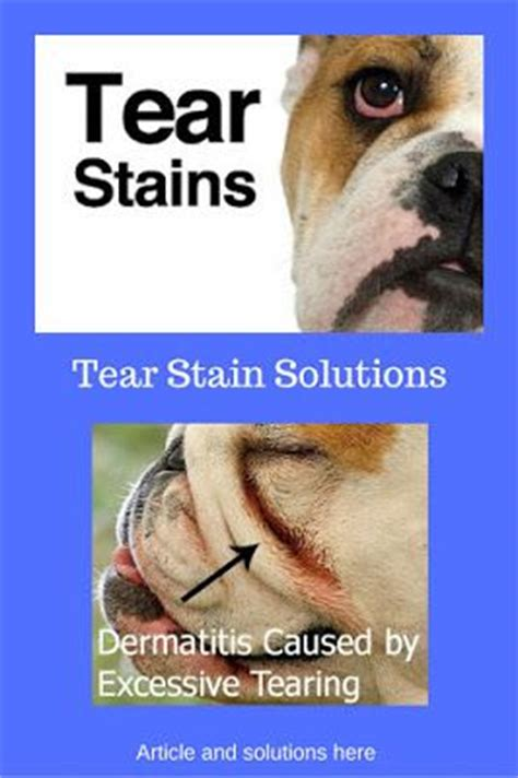 yorkie tear stain remover 1000 images about pets on treats diy toys and yorkie