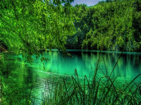 imagenes de paisajes verdes para pantalla fonditos hermoso y verde paisajes otros