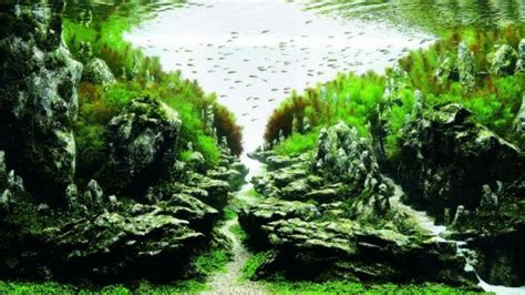 Japanese Aquascape Artist by Winners Of The 2015 International Aquatic Plants Layout