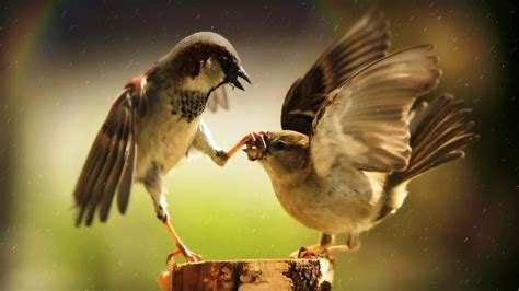 it s hd animals funny wallpapers amazing pictures of nature sfondo quot animali uccelli birds quot 1920 x 1080 animali
