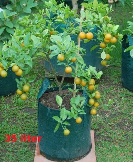 Harga Planter Bag 2016 planter bag hijau 35 liter bibitbunga