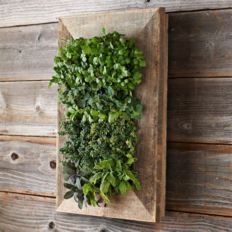 Planter Wall reclaimed barn door vertical wall planter the green