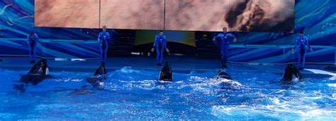 World S Whale Retailer Ends All Whale - one seaworld s new killer whale show make its