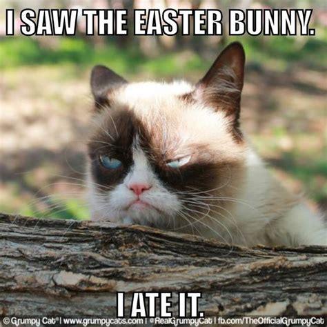 Tard The Cat Meme - 6759 best images about quot 1 tard quot on pinterest gift