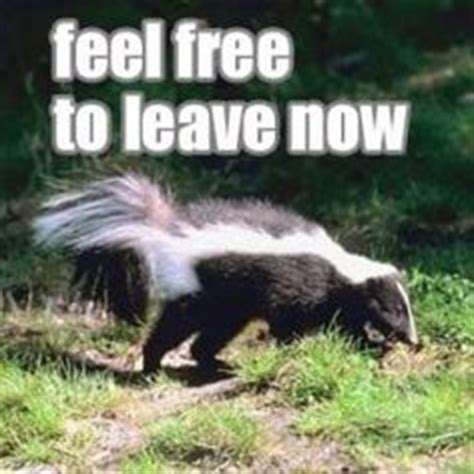 How To Get Rid Of Skunk In Backyard by 1000 Images About Skunks On Baby Skunks