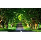 Hd Wallpapers Natural Download Best Nature Wallpaper Full
