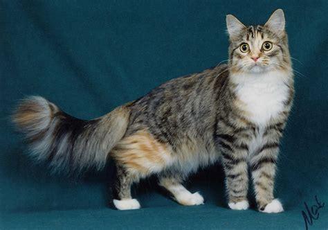 Cat Rambut Ps pendek newhairstylesformen2014