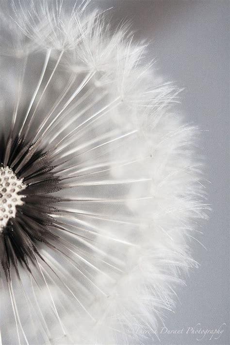 black and white dandelion wallpaper 201 pingl 233 par delphine d sur wc pinterest beautiful