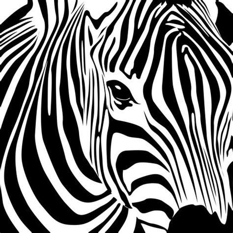 zebra art vector design zebra art and zebra print