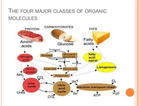 9 carbohydrates are composed of which three elements food chemistry meetorganic molecules in organic foods