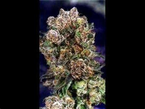 blueberry yum yum mp elitevevo mp3 download