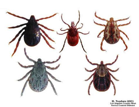 ticks in bed don t let the bedbugs bite other sayings the engledow chronicles