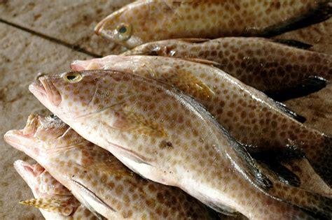 White Fish Bakso Ikan Hiwan e comting acmt area and commodity of maritime tourism