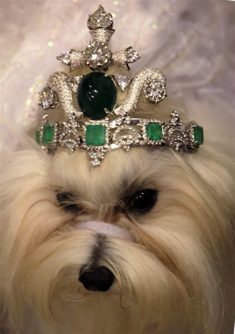 tiara puppy thai designer reveals tiara