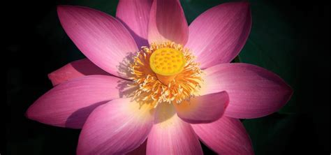 lotus flower anatomy parts of a flowering plant quiz