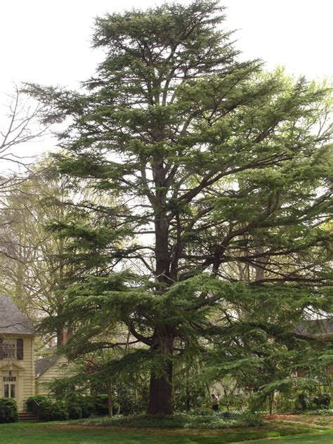 Trees Nc - tree services in tree stump removal costs etc