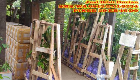 Bibit Durian Bawor Malang jual bibit durian di malang penjual bibit durian beli