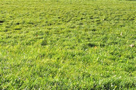 image pattern grass personal territory exploration 47 found patterns