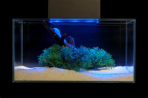 aquascaping pet pitch usa